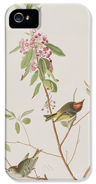 Ruby Crowned Wren IPhone 5s Case by John James Audubon