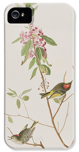 Ruby Crowned Wren IPhone 5s Case