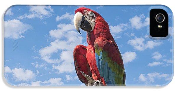 Macaw iPhone 5s Case - Scarlet Macaw by Kim Hojnacki