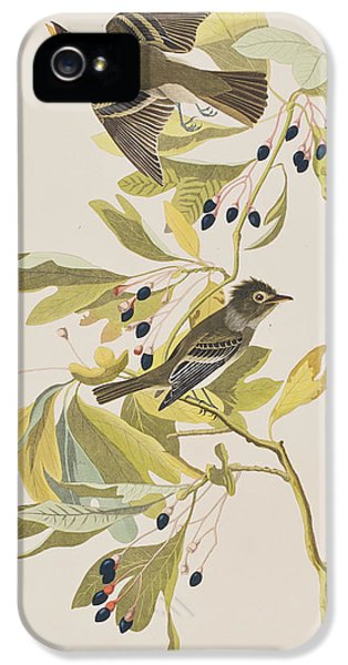 Small Green Crested Flycatcher IPhone 5s Case by John James Audubon