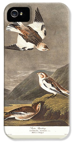 Snow Bunting IPhone 5s Case