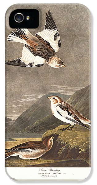 Snow Bunting IPhone 5s Case by Rob Dreyer