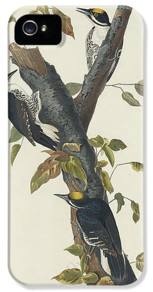 Three-toed Woodpecker IPhone 5s Case by Rob Dreyer