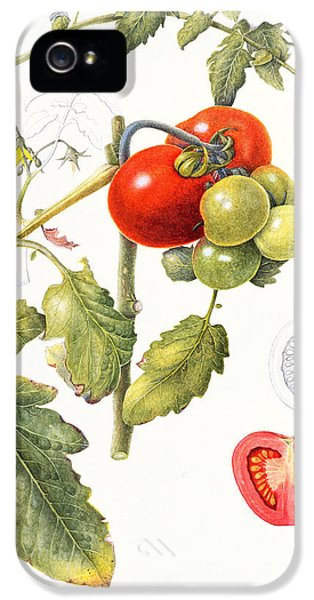 Tomatoes IPhone 5s Case