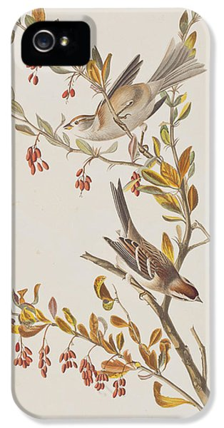Tree Sparrow IPhone 5s Case by John James Audubon