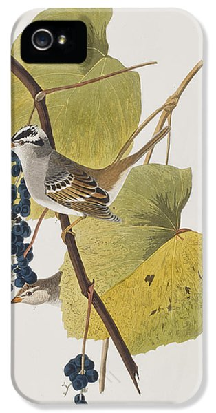 White-crowned Sparrow IPhone 5s Case by John James Audubon
