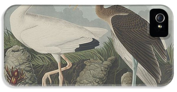 Ibis iPhone 5s Case - White Ibis by Dreyer Wildlife Print Collections