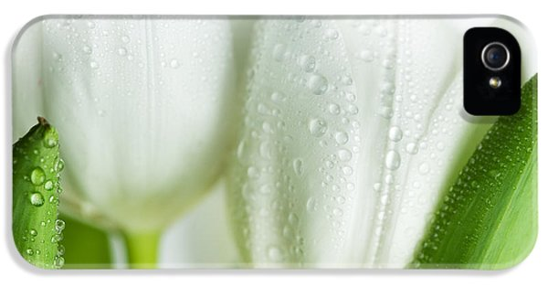 Tulip iPhone 5s Case - White Tulips by Nailia Schwarz