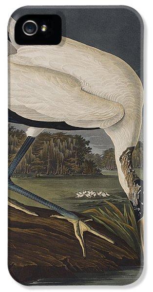 Wood Ibis IPhone 5s Case by John James Audubon