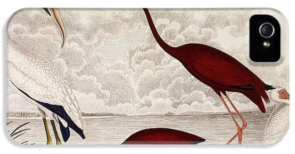 Wood Ibis, Scarlet Flamingo, White Ibis IPhone 5s Case by Alexander Wilson