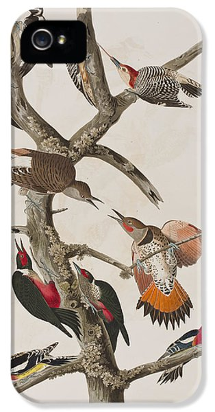 Woodpecker iPhone 5s Case - Woodpeckers by John James Audubon