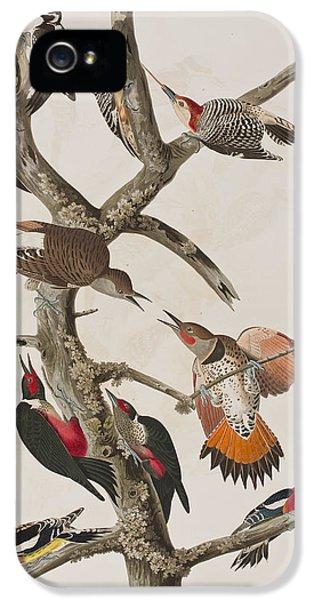 Woodpeckers IPhone 5s Case by John James Audubon