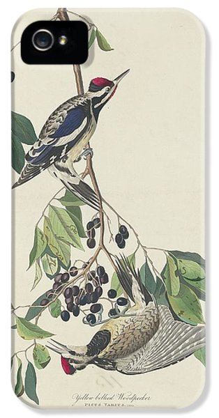 Yellow-bellied Woodpecker IPhone 5s Case