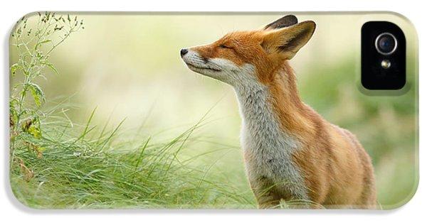 Zen Fox Series - Zen Fox IPhone 5s Case by Roeselien Raimond