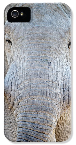 Elephant iPhone 5s Case - African Elephant Loxodonta Africana by Panoramic Images