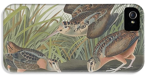 American Woodcock IPhone 5s Case by Rob Dreyer