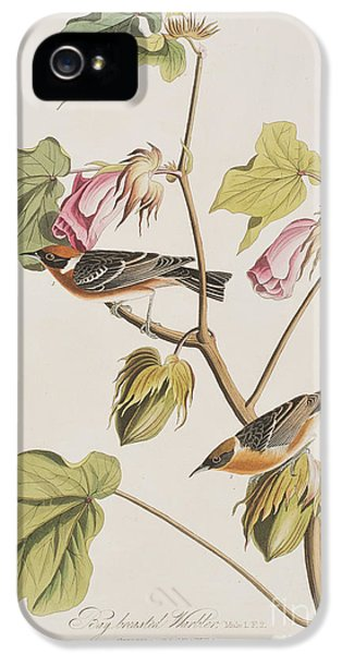 Bay Breasted Warbler IPhone 5s Case by John James Audubon