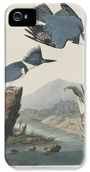 Belted Kingfisher IPhone 5s Case