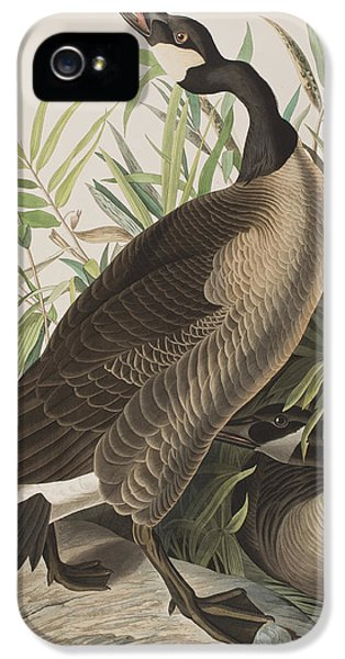 Canada Goose IPhone 5s Case by John James Audubon