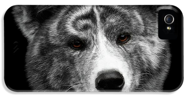 Dog iPhone 5s Case - Closeup Portrait Of Akita Inu Dog On Isolated Black Background by Sergey Taran