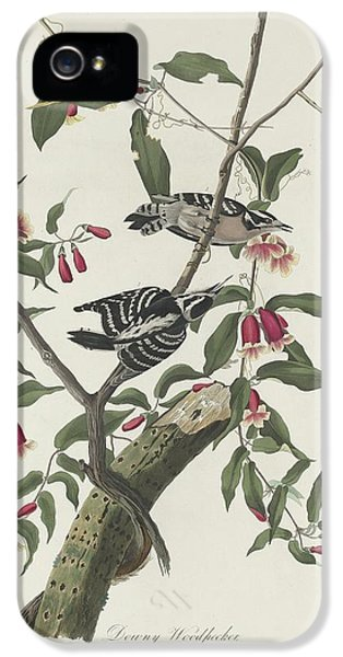 Downy Woodpecker IPhone 5s Case by Rob Dreyer