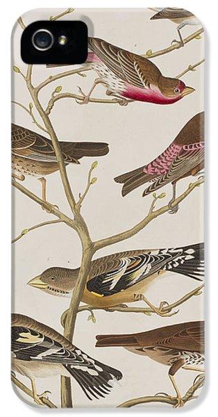 Finch iPhone 5s Case - Finches by John James Audubon
