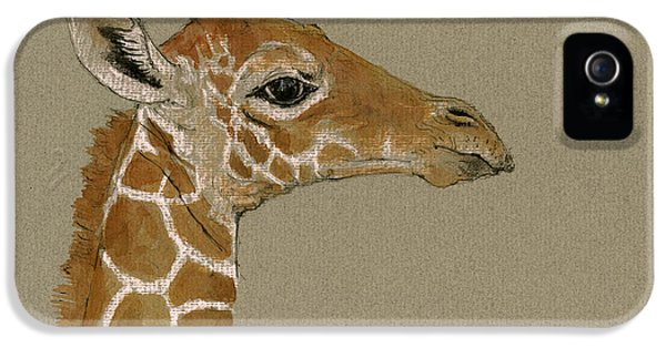 Giraffe Head Study  IPhone 5s Case by Juan  Bosco