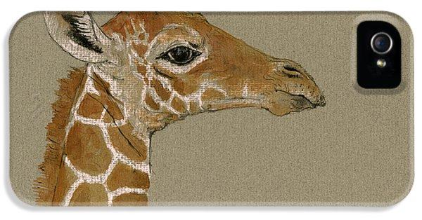 Giraffe Head Study  IPhone 5s Case by Juan  Bosco