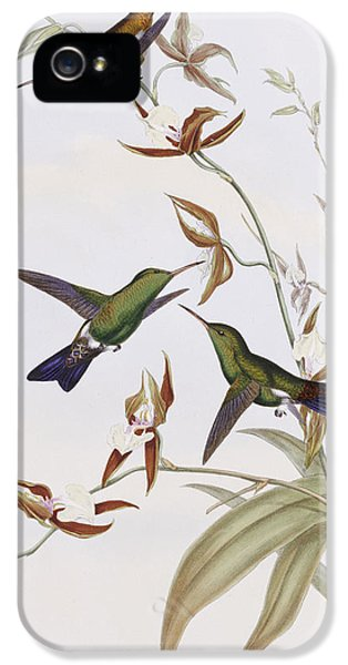 Humming Bird iPhone 5s Case - Hummingbirds by John Gould