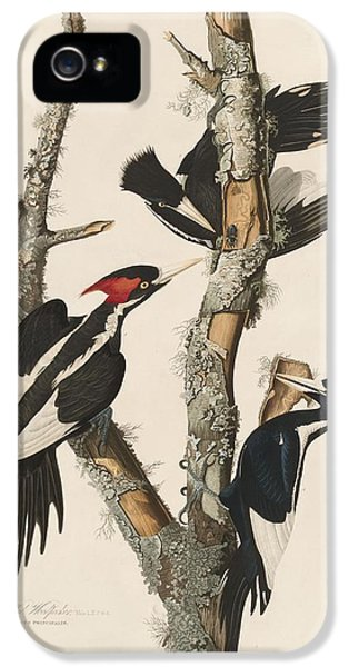 Ivory-billed Woodpecker IPhone 5s Case by Rob Dreyer