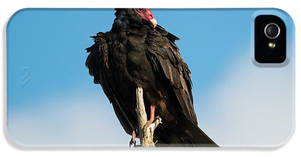 Buzzard iPhone 5s Case - Looking For A Meal by Mike Dawson
