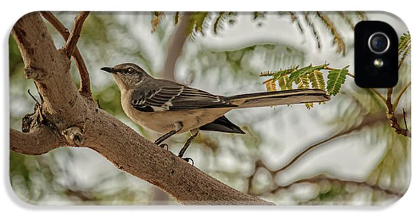 Mockingbird iPhone 5s Case - Mockingbird by Robert Bales