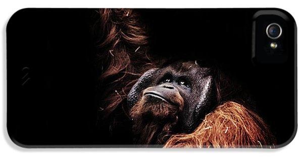 Orangutan IPhone 5s Case by Martin Newman