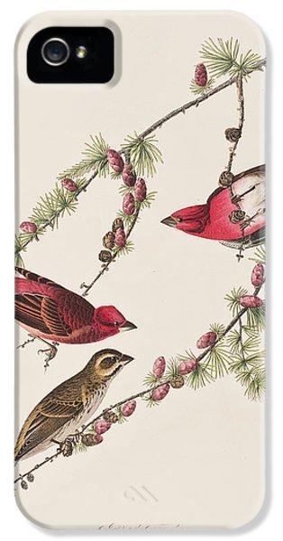 Purple Finch IPhone 5s Case by John James Audubon