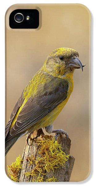 Crossbill iPhone 5s Case - Red Crossbill by Doug Herr