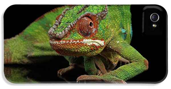 Sneaking Panther Chameleon, Reptile With Colorful Body On Black Mirror, Isolated Background IPhone 5s Case by Sergey Taran