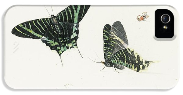 Studies Of Two Butterflies IPhone 5s Case by Anton Henstenburgh