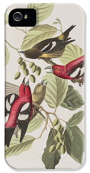 Crossbill iPhone 5s Case - White-winged Crossbill by John James Audubon