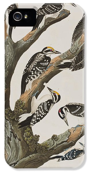 Woodpeckers IPhone 5s Case
