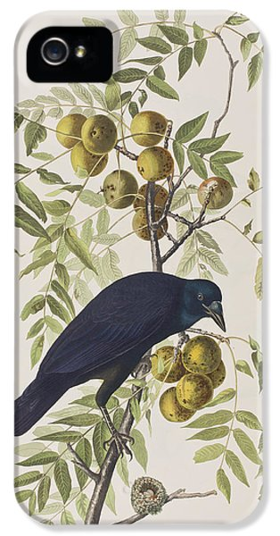 American Crow IPhone 5s Case by John James Audubon