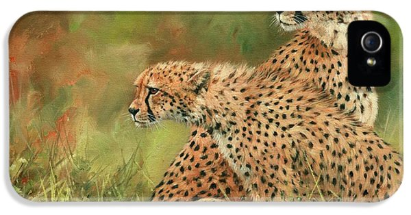 Cheetahs IPhone 5s Case by David Stribbling
