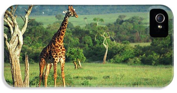 Giraffe IPhone 5s Case