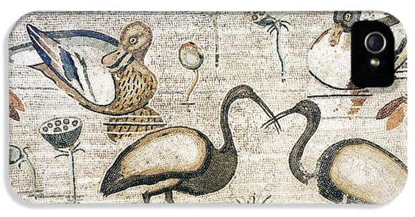 Nile Flora And Fauna, Roman Mosaic IPhone 5s Case by Sheila Terry