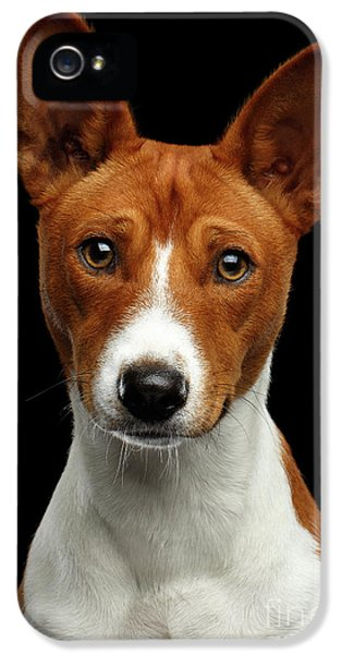 Pedigree White With Red Basenji Dog On Isolated Black Background IPhone 5s Case by Sergey Taran