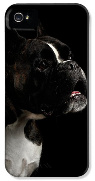 Purebred Boxer Dog Isolated On Black Background IPhone 5s Case