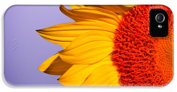Sunflowers IPhone 5s Case by Mark Ashkenazi