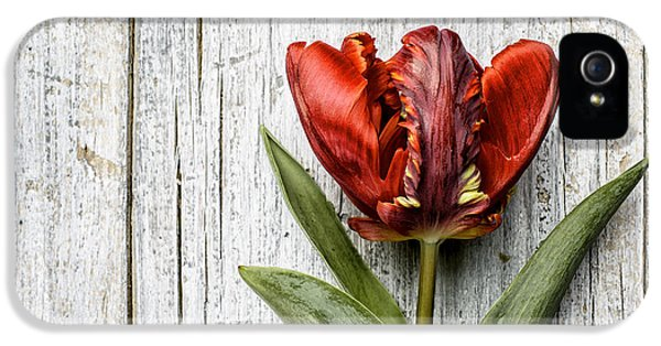 Tulip iPhone 5s Case - Tulip by Nailia Schwarz