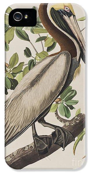Brown Pelican  IPhone 5s Case
