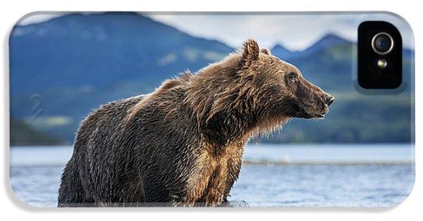 Coastal Brown Bear  Ursus Arctos IPhone 5s Case by Paul Souders
