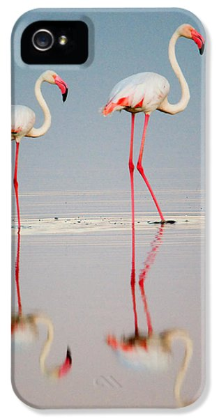 Greater Flamingos Phoenicopterus Roseus IPhone 5s Case by Panoramic Images